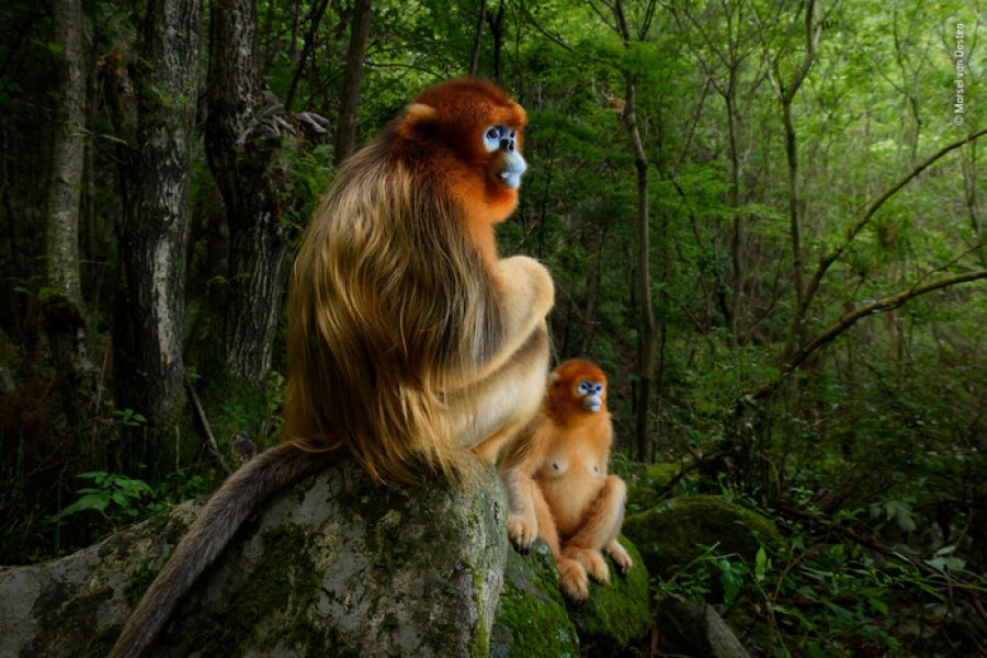 exposition Wildlife photographer of the year