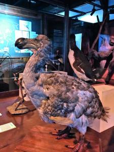 Reconstitution Dodo
