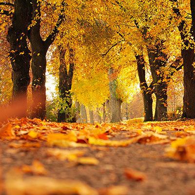 Sentiers forestiers & promenades