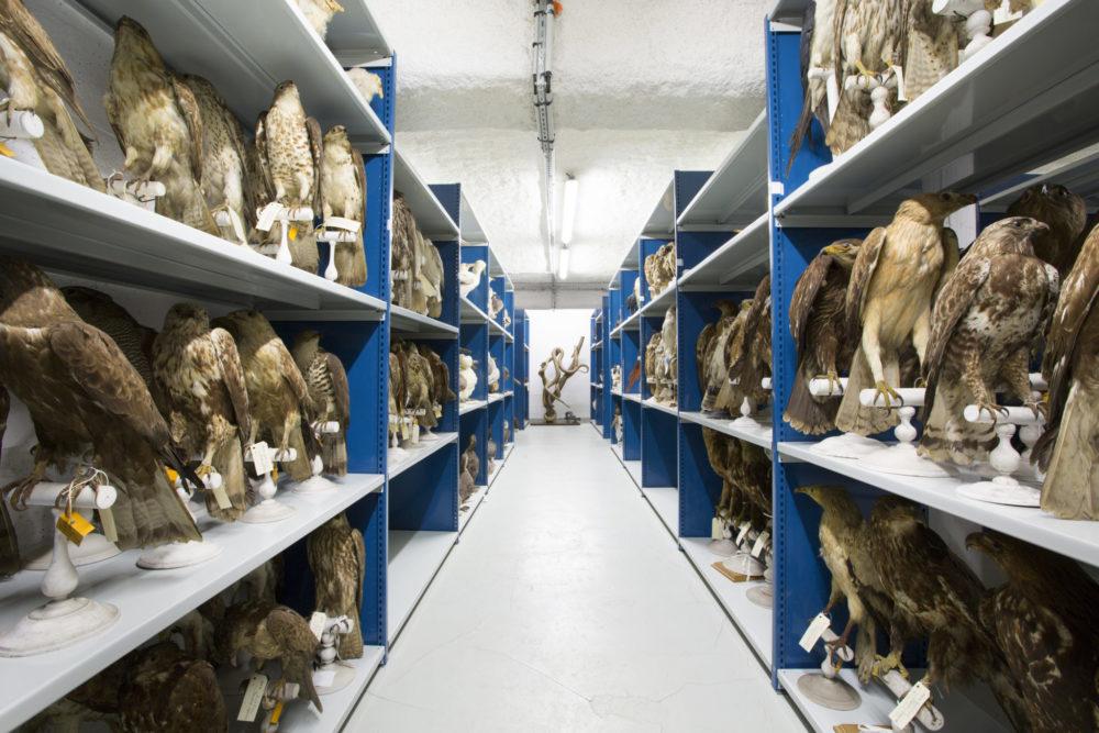Les réserves du musée de la fabrique des savoirs