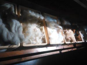 Conférence sur la filière laine