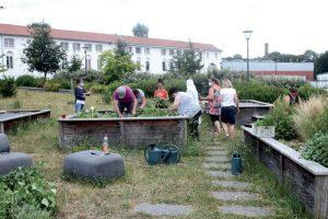 Plantations d'aromatiques au sein du verger du Puchot. Initiative d'un collectif d'Elbeuviens ayant bénéficié du Fonds de participation des habitants.